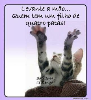 #filhode4patas #cachorro #gatos #petmeupet #amoanimais
