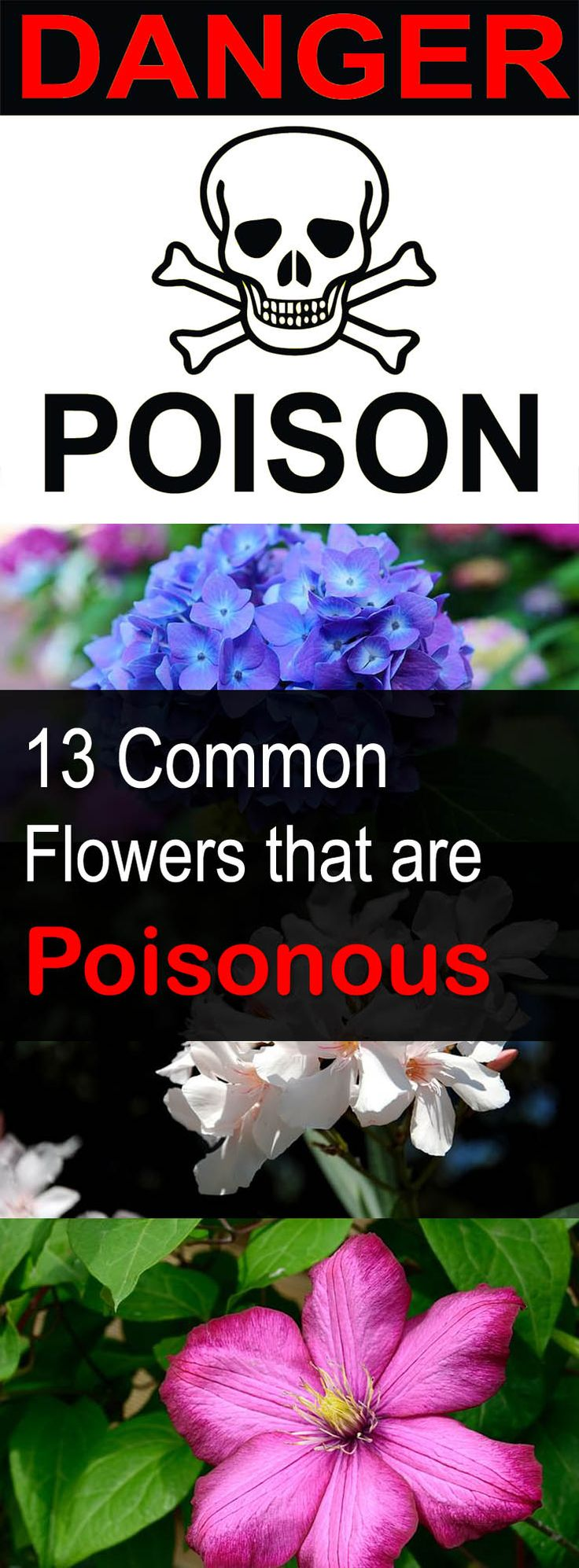 13 very common and popular Flowers that are Poisonous.  Every gardener should know about these toxic flowers.