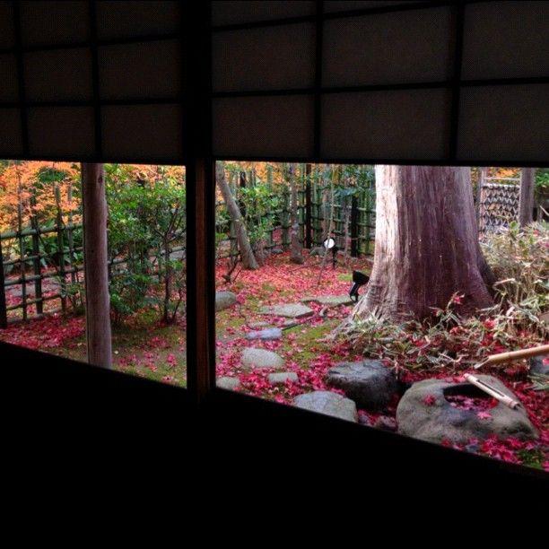 雪見障子越しに眺めてみる。 【2012.11.30撮影】 #kyoto #京都 #紅葉 #寺 #庭園