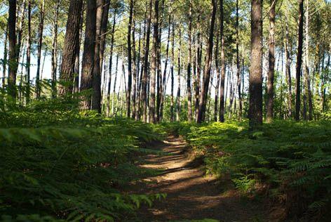 """Sentier de découverte """"le Courant des Forges"""" - Pontenx-les-forges - Mimizan"""