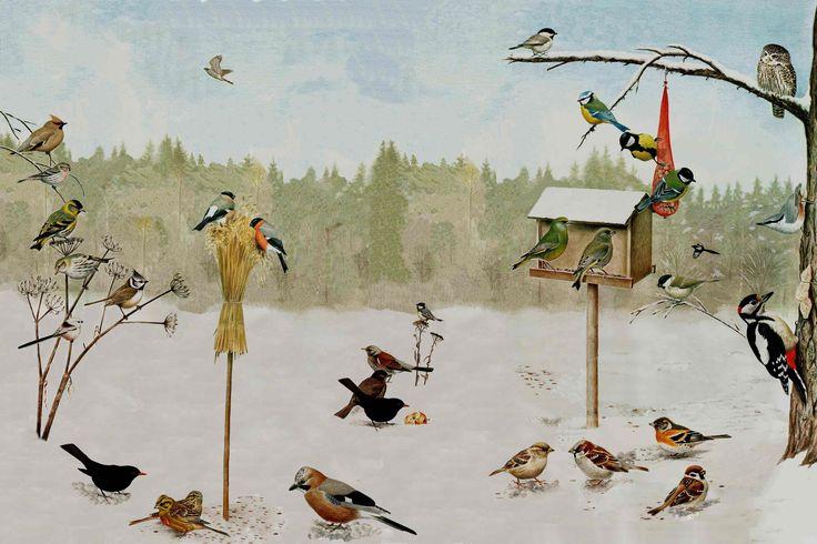 Lintulaudan lintuja. Klikkaamalla auki hieno, iso kuva tutkittavaksi!