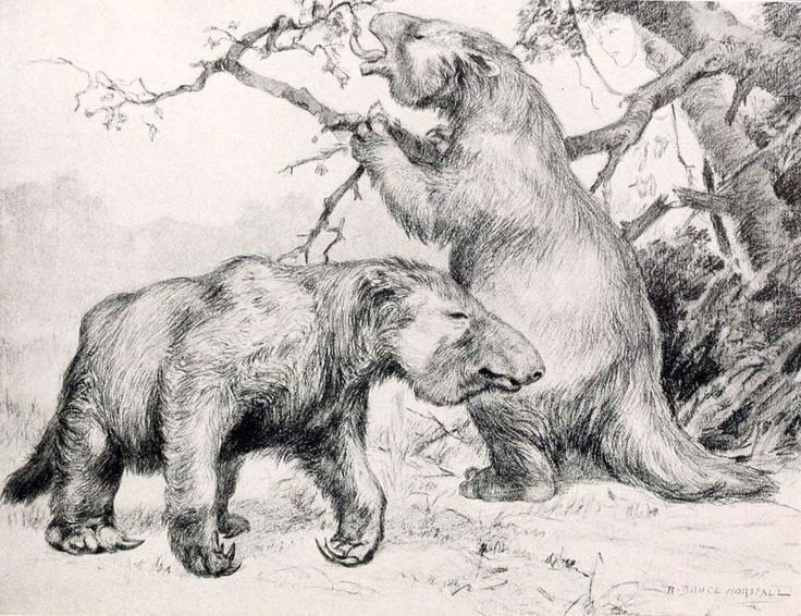Elephant-sized ground sloths, or Megatherium, were endemic to South America.