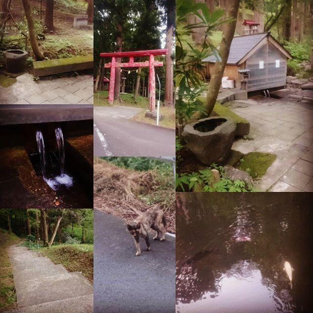 【d.monkey.017】さんのInstagramをピンしています。 《浪岡の十和田霊泉に寄り道。  やっぱり落ち着くな。  水めっちゃ美味いし。  飲食店やってる人がわざわざ水汲みに来るぐらい。  これでラーメン作ったら美味いだろうなぁ…  #青森県 #青森市 #青森 #あおもり #japan #aomori #浪岡 #十和田霊泉 #湧水 #水 #神社 #山 #寄り道 #池 #鯉 #お盆 #猫 #にゃんこ #野良猫 #やまねこ #ネコ #ねこ #鳥居 #森林 #森林浴 #8月 #august #夏 #summer #water》