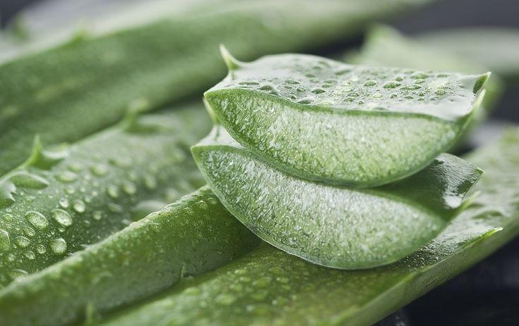 ∆ Aloe Vera...10 Reasons Why Every Home Should Have An Aloe Vera Plant