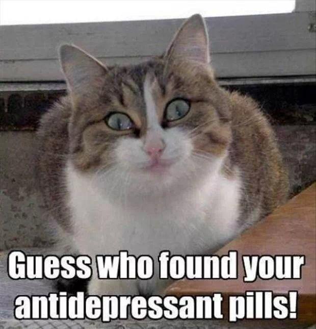 happy kitty!!