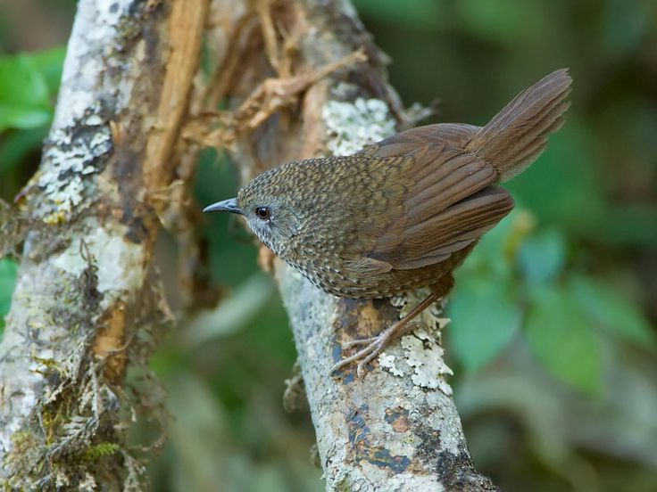 Bird Sanctuaries in Mizoram, India @ Sanctuariesindia.com