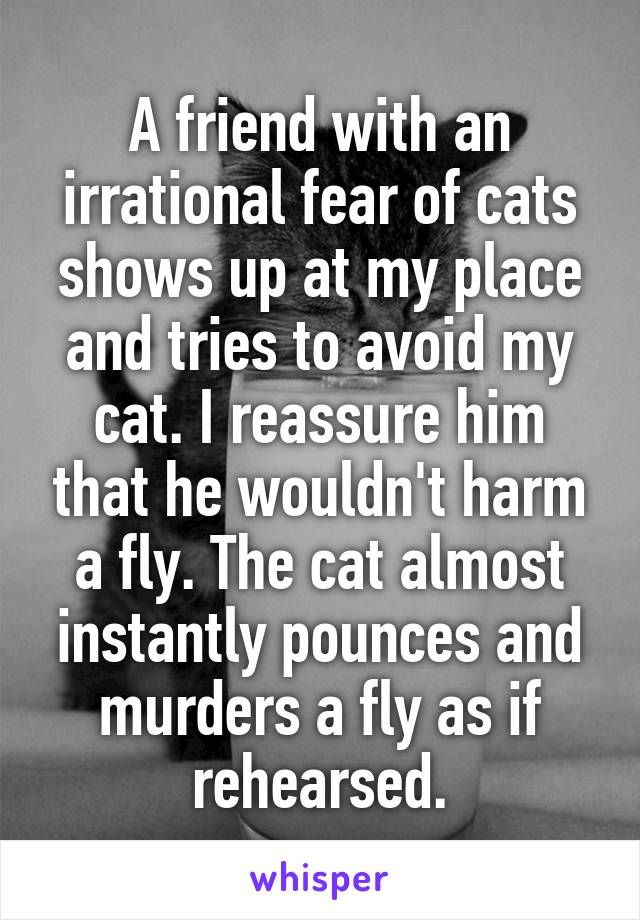 A friend with an irrational fear of cats shows up at my place and tries to avoid my cat. I reassure him that he wouldn't harm a fly. The cat almos…