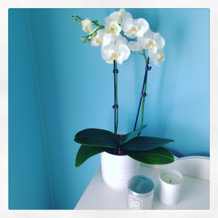 Orchids #flowers #home