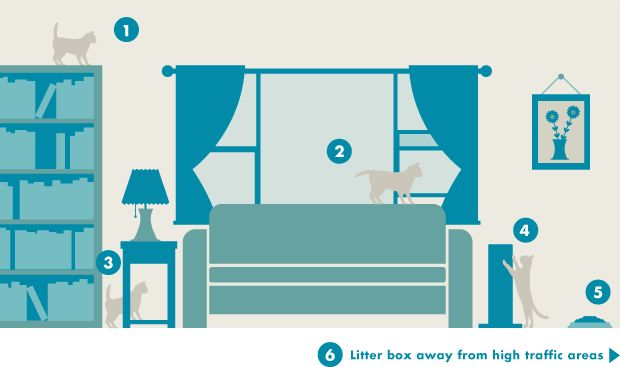 Learn six ways you can make your cat feel more comfortable in your home.