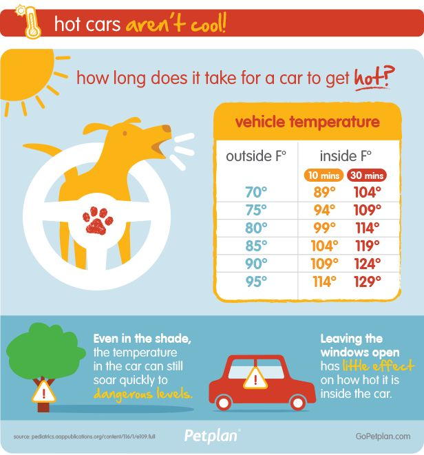 How Long Does It Take For A Car To Get Too Hot For Pets