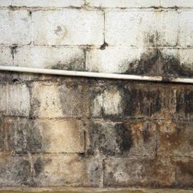 How to clean mold off basement concrete walls sous sols for Basement concrete cleaner
