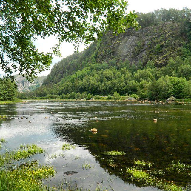 Just a few weeks to go until i will be back in this  beautiful  Nature.  #norja #Norge #Norwegen #skandinavien #igscandinavia #scandinavia #visitnorway #Nature #naturephotography #fjord #norgephoto #fishing #Travelgram #vacation #roadtrip #angelurlaub #sommar #flowers #mökki #Summer #urlaub #relaxing #blueskys