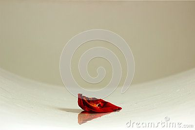 Fisheye shot of one red rose petal on the table