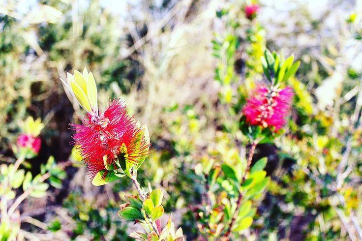 #Israel #Eilat #IsraelSouth #RedSea #Израиль #Цветы #Flowers #Winter #Зима #КрасноеМоре  #Эйлат #Hotel #Holidays #ИзраильЮг #Юг #אילת #Desert #Negev #Пустыня #Негев #freediving #Fatal #diving  #Isrotel  #hotelisrael eilat-il.com    freediving.eilat-il.com