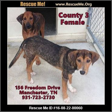 ― Tennessee Dog Rescue ― ADOPTIONS ―RescueMe.Org  UPDATE:  Lula has been adopted, but Lolly still needs a home.  Lolly & Lula are Tree Walker Coonhound mixes and can be adopted separately or together.