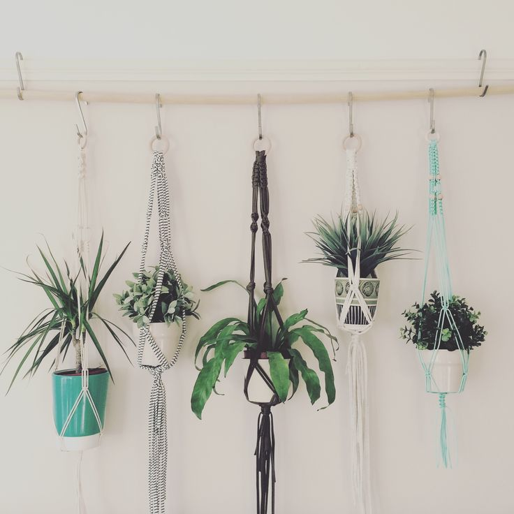 Plant hangers made by Macrame Adventure.