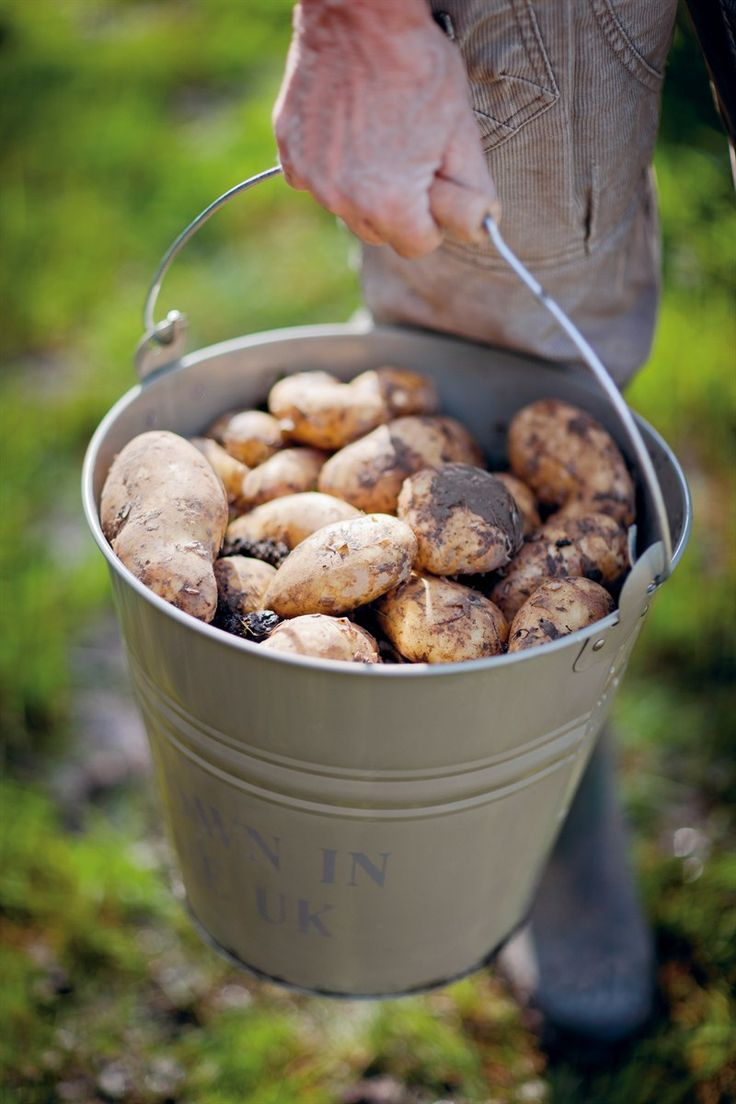 Love it.A big bucket full of potatoes!That's why we Love the Country living
