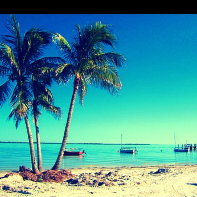 Three Palms, Pretty Palms, Palms Trees, Vacations Dreams