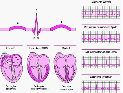 eletrocardiograma normal - Pesquisa Google