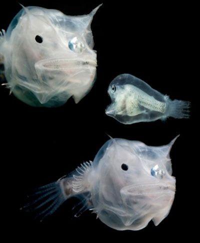 フォトギャラリー:奇妙で美しい暗闇の生き物たち   ナショナルジオグラフィック日本版サイト