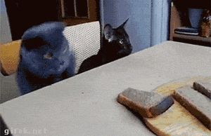 The bread thief and his accomplice...