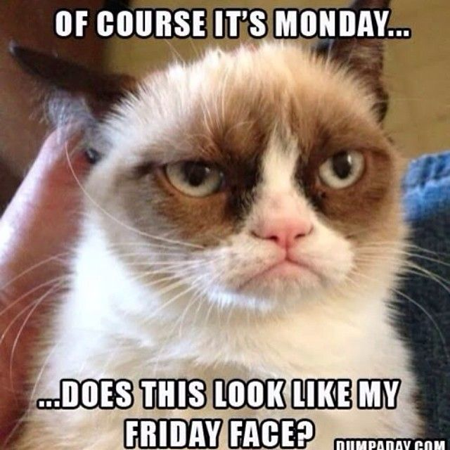 Some Monday morning humor to help get us through the week. www.bhcosmetics.com