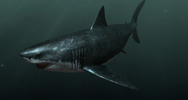 Sea Monsters Megalodon 94 best images about S...