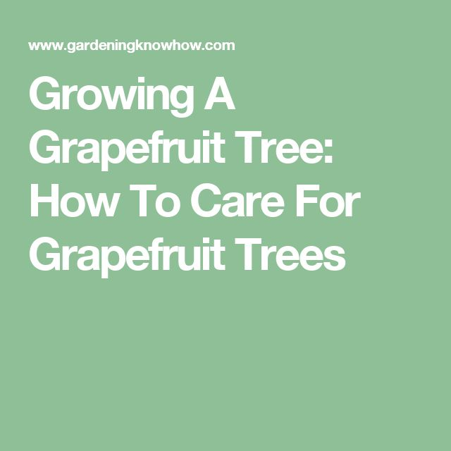 Growing A Grapefruit Tree: How To Care For Grapefruit Trees