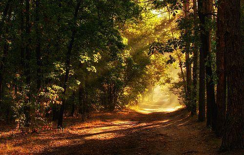 Фотограф Михаил MSH (Mykhailo Sherman) - утро в лесу #1867887. 35PHOTO