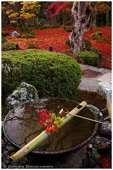 "https://flic.kr/p/QscJ8q | 圓光寺の落ち葉 (Kyoto, Japan) | This ""tsukubai"" water basin is always decorated with some seasonal ikebana. Great attention to detail! ( ^^)v"