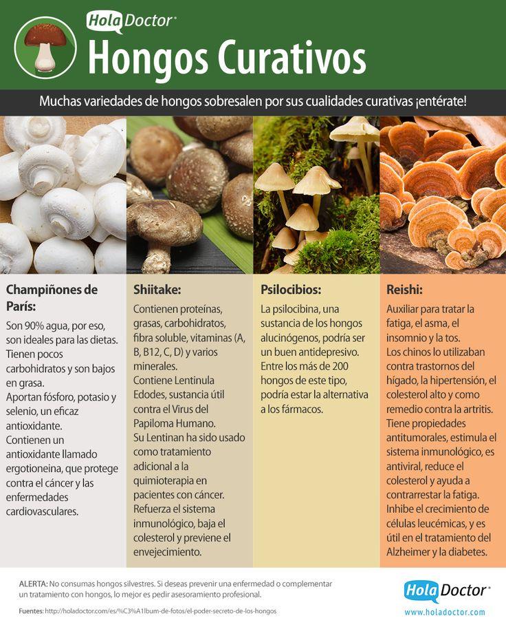 Los hongos comestibles tienen más beneficios a la salud de los que crees. Descúbrelos aquí > http://bit.ly/1C3beH9