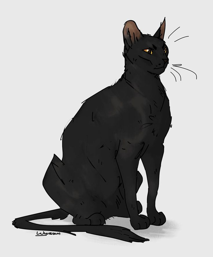 Warrior Cats A Vision Of Shadows Book 1: 17 Best Images About Warrior Cats On Pinterest