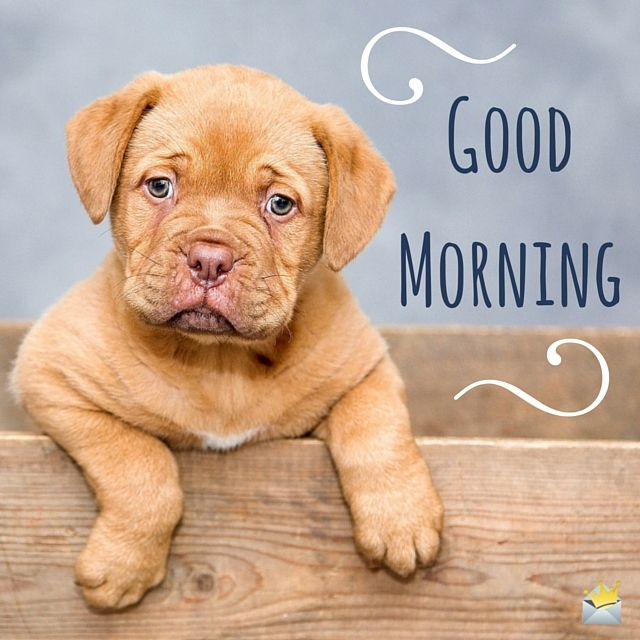 Take a look at our collection of good morning images and you can't help but smile! Whether it's that cute puppy or a grumpy cat, we all have to admit a smile is the ideal way of starting your day.