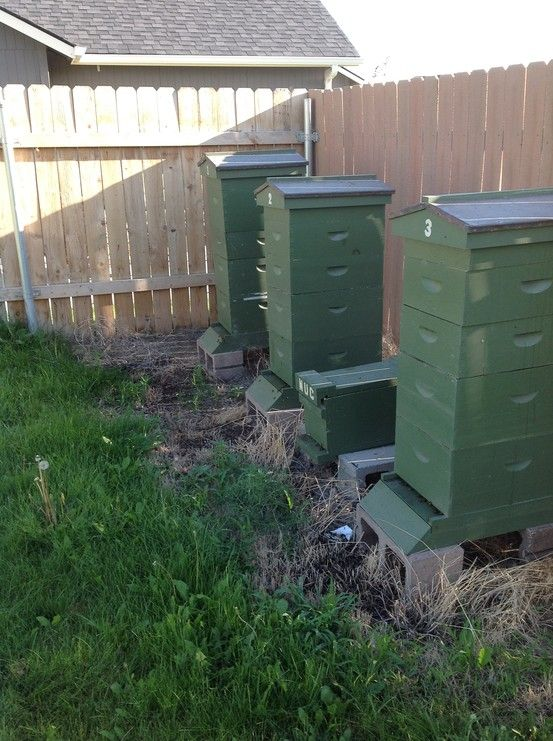 42 best Hives: Pictures of Hives all over images on ...