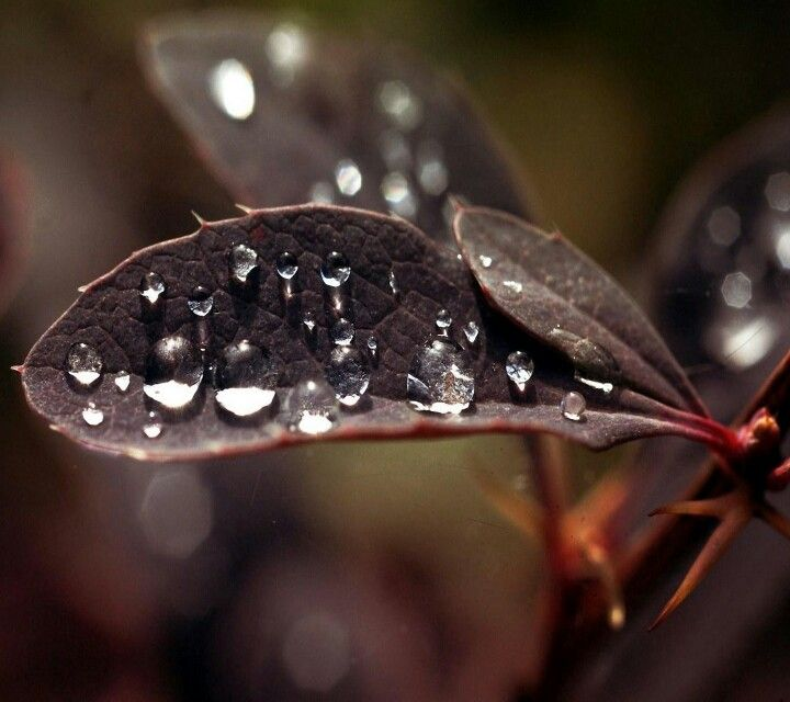 The water drops cools the leaf .I like watering my garden