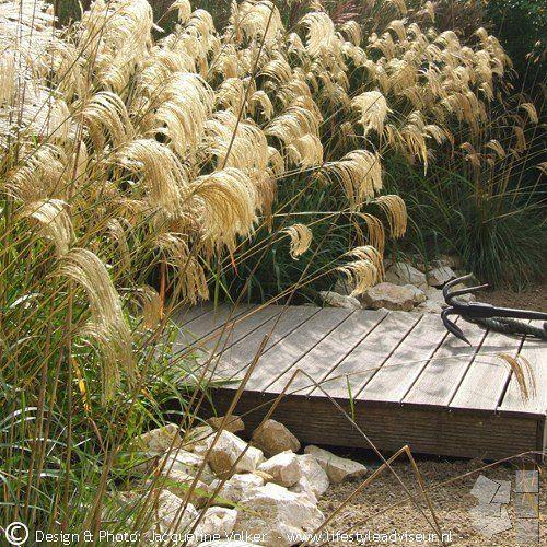 Siergras Miscanthus nepalensis bloeit eindeloos, nog tot ver in december feestelijk, fonkelend in de zon. Ornamental grass Miscanthus nepalensis sparkling in the sun in December.  #kleurvanhetjaar2016 #kvhj2016 #tuinen #tuinenvanappeltern #tuinenfestival