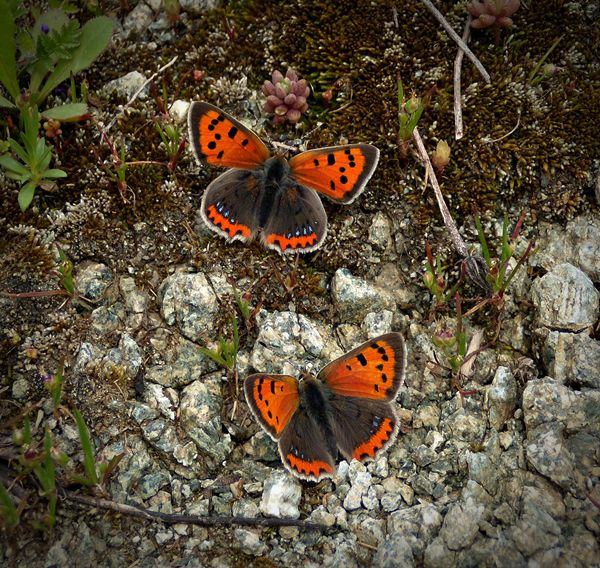 butterflies by lisans.deviantart.com on @deviantART