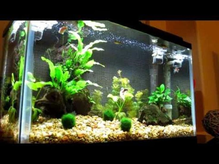 15 best images about aquarium ideas and design on for Good fish for 10 gallon tank