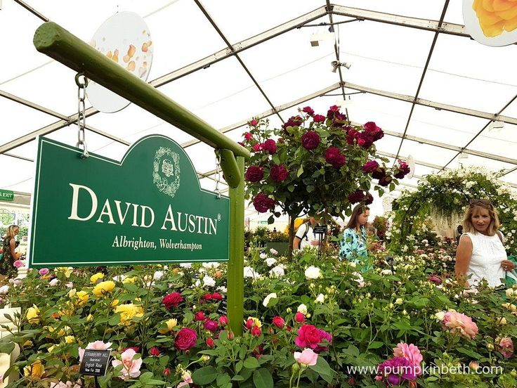 The judges presented David Austin Roses' stand with a Gold Medal, and the prestigious title of Best Rose Exhibit, inside The Festival of Roses Marquee, at the RHS Hampton Court Palace Flower Show 2017.