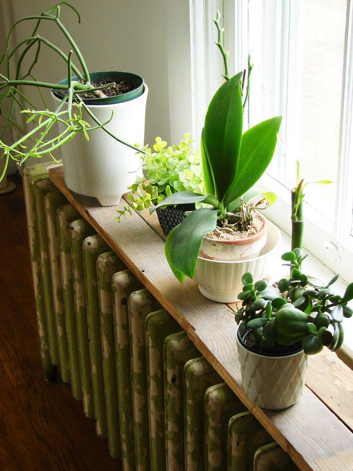 i love nothing more than houseplant on a small shelf atop a radiator....why do we not have have them here in north america?!?!?!
