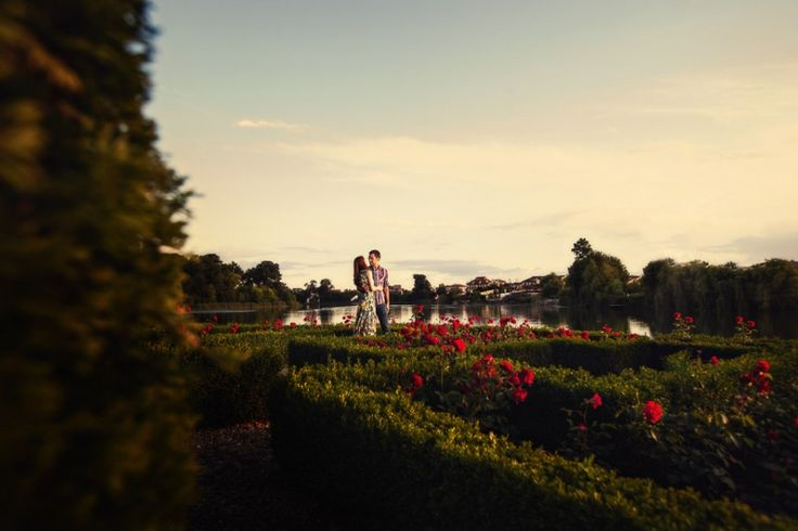 fotografii logodna Mogosoaia, foto nunta, gradina trandafiri