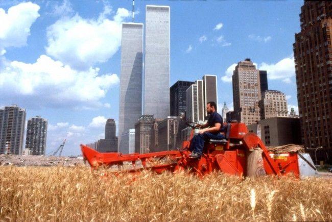 #AgnesDenes #wheatfield