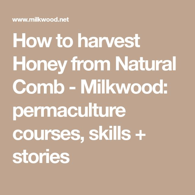 How to harvest Honey from Natural Comb - Milkwood: permaculture courses, skills + stories
