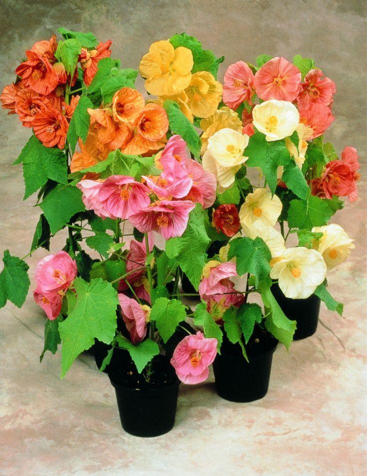 Красивые цветущие комнатные растения фото и названия, памяти открытка картинки