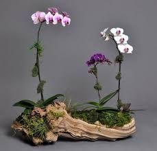 Resultado de imagen para plantas trepadoras en troncos