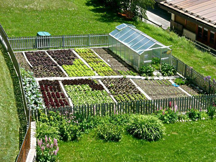 A garden of vegetables. Mmm