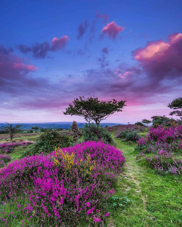If you planing to watch another boring #sunset from you car this #bankholiday then go to #dartmoor instead as magic happen here #BritainsOceanCity#Plymouth#lovedartmoor#wanderlust #gooutdoors #nationaltrust#swisbest #fall #autumn #devonlife #visitbritain #lovefordevon #ilovesouthdevon