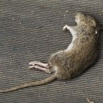 Our Dead Animal Removal services Orlando experts at Critter & Pest Defense will provide you with an extensive search of the location and the removal of the animal. Call us today and remove the smell and prevent any future issues with critter and pest defense. Visit: http://www.critterandpestdefense.com/dead-animal-removal/