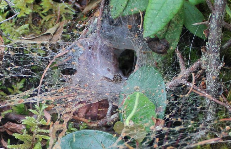 This is a spiders home in the rocks on my sister's lake in Nova Scotia, Canada. love this photo.