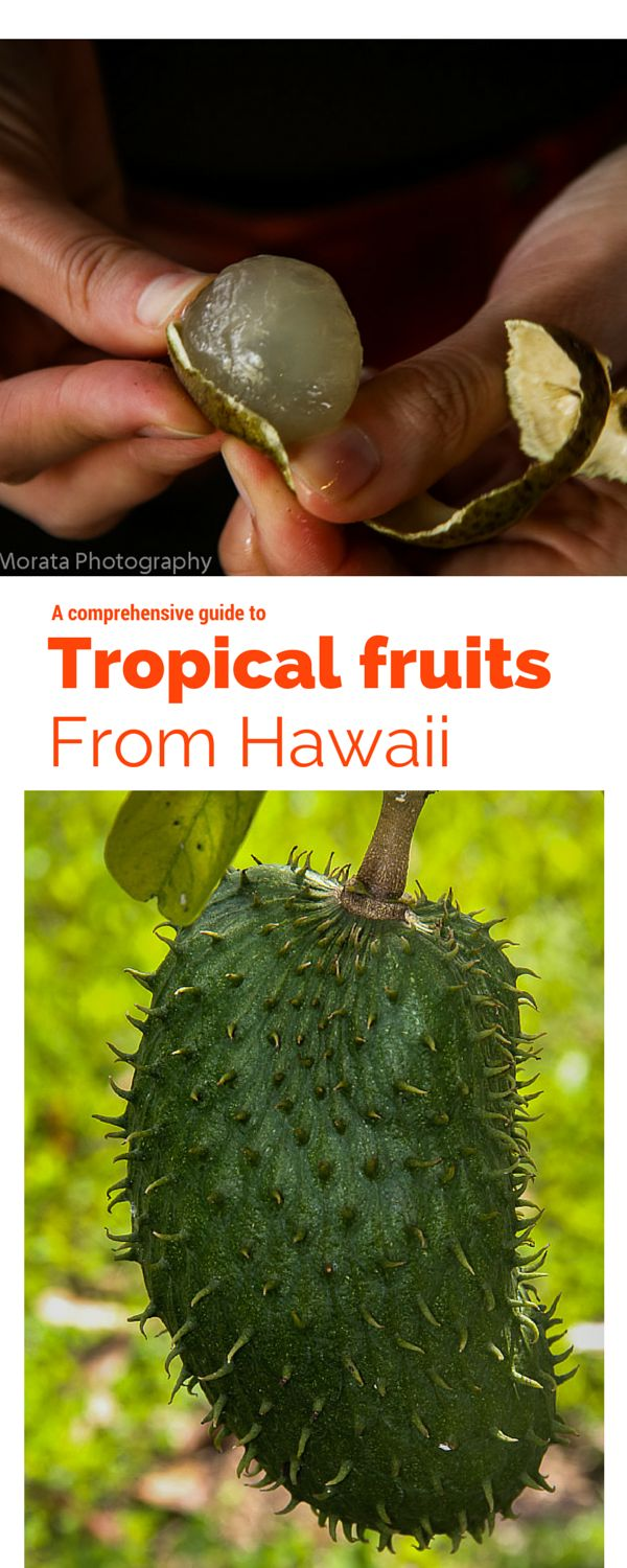 A comprehensive guide of the many different types of tropical fruit you can find in Hawaii from the basic pineapples and bananas to exotic rambutan and longan. This includes health factors and when they are typically in season http://travelphotodiscovery.com/tropical-fruit-from-hawaii/